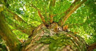 Ein schöner Baum im Garten