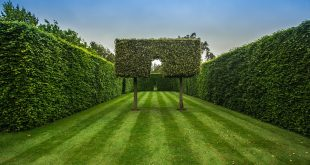 Die Hecke mit Pflanzen