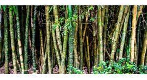Bambushecken - ein robuster Sichtschutz Bestseller