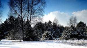 In 5 Schritten zu einem winterfesten Garten Bestseller