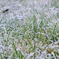 Tipps für die Pflege des Rasens im Winter