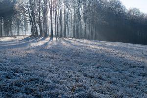 Den Rasen im Winter pflegen